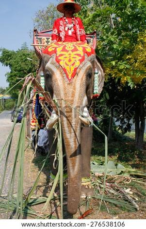 Elephants in Thailand - stock photo