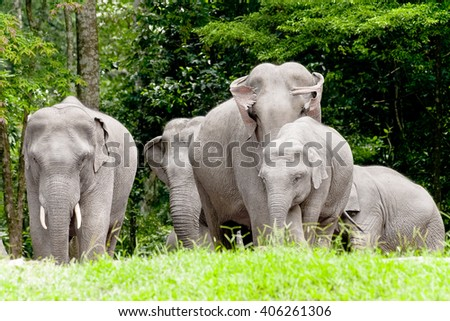 Elephants in tropical forests - stock photo