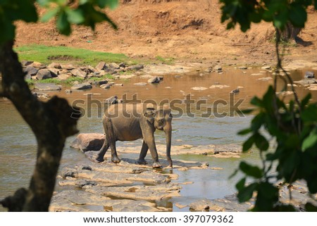 elephants in Yaka National PArk, Srilanka