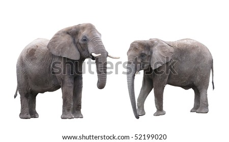 Elephants male and female - stock photo