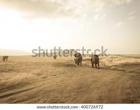 Elephants of savanna. Eastern Africa - stock photo