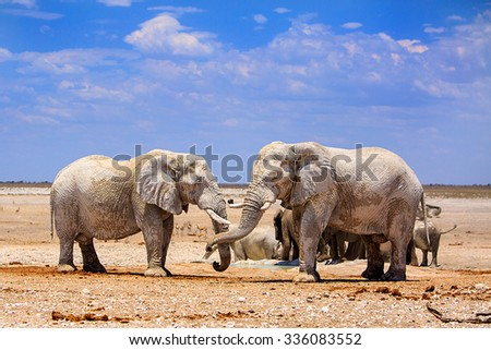 Elephants on the dry dusty plains of Etosha National park with a blue cloudy sky next to a waterhole