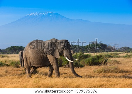 Elephants on the Kilimanjaro background