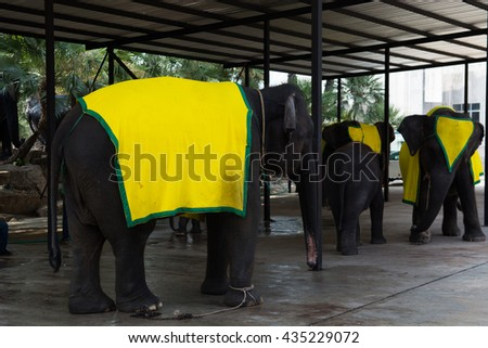 Elephants show in Pattaya .