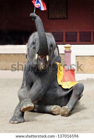 Elephants show in Phuket zoo, Phuket, Thailand - stock photo