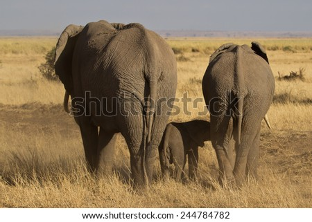 Elephants walking away