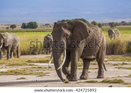 Elephants with baby elephants. Kenya National Park. Africa. - stock photo