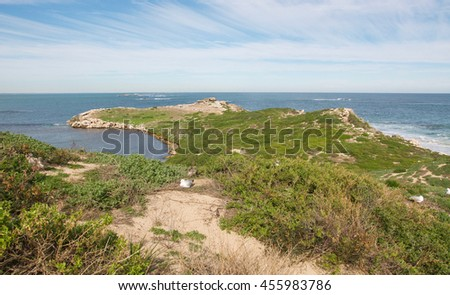 Elevated dune view with nesting sea gulls and Indian Ocean seascape at Penguin Island in Rockingham, Western Australia/Ocean View: Penguin Island Dunes/Rockingham, Western Australia - stock photo