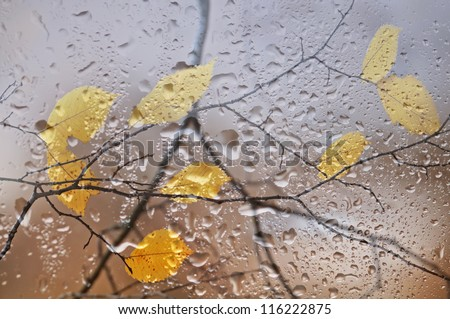 Elm branches with yellow leaves behind a window with rain drops.