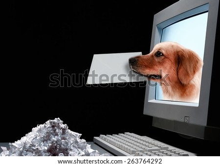 email good for dog - stock photo