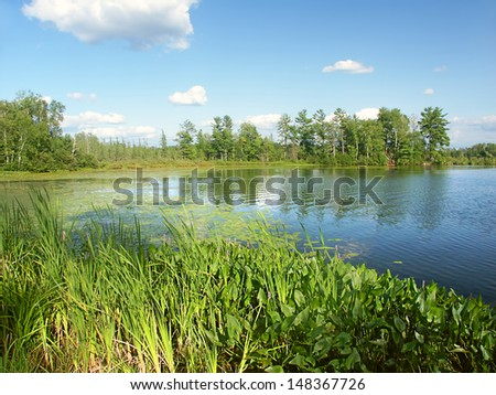Emergent aquatic vegetation along Little Bearskin Lake of northwoods Wisconsin - stock photo