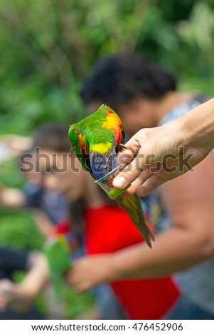 Emmen, The Netherlands - August 30, 2016: Zoo visitors feeding Lori, Netherlands