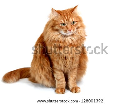 Emotional red cat, isolated on white background - stock photo