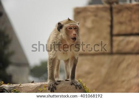 Emotions and  life wild  monkey - stock photo
