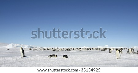 Emperor penguin (Aptenodytes forsteri) colony on the sea ice in the Weddell Sea, Antarctica - stock photo