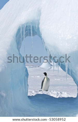 Emperor penguin (Aptenodytes forsteri) standing on the ice in the Weddell Sea, Antarctica - stock photo