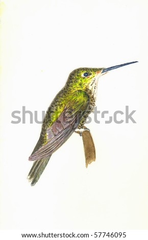 Empress Hummingbird