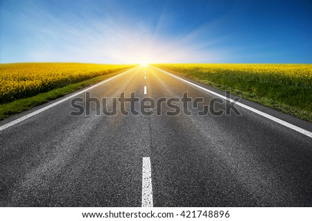 empty asphalt road and floral field of yellow flowers. natural  summer background