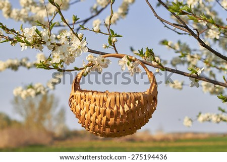 Empty basket and bouquet of flowers in the garden with white bloom - stock photo