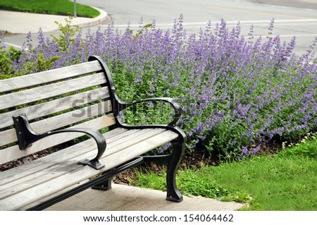 Empty bench surrounded by Lavender in Toronto - stock photo