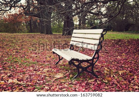 Empty bench under maple trees, falling leaves on ground, vintage photograph look