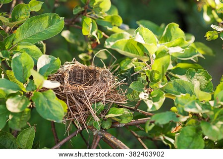Empty bird nest on a tree branch covered with green leaves, copy space