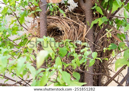 empty bird nest on the branch  - stock photo