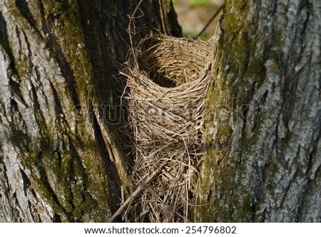 Empty bird's nest between two trees in the spring forest - stock photo