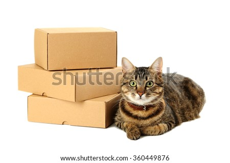 Empty cardboard boxes with cat isolated on a white - stock photo