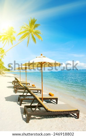 Empty chairs between palms trees - stock photo