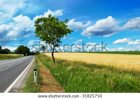 Empty countryside road among trees and fields at summer day before thunderstorm