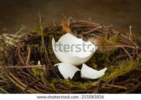 Empty eggshells lying in an abandoned nest - stock photo
