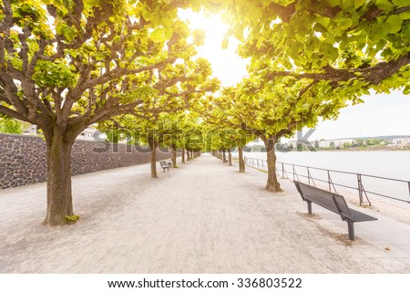 Empty footpath along Rhine river in Bonn. There are two rows of trees with green leaves, and some benches to take a seat. In the bottom of the image there is a lot of free space to add some text. - stock photo