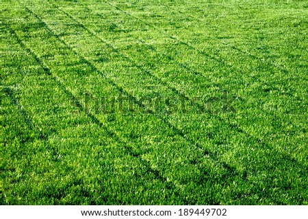 empty green grass field