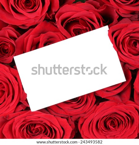 Empty greeting card with copyspace for your own text on red roses on birthday Valentine's or mothers day - stock photo
