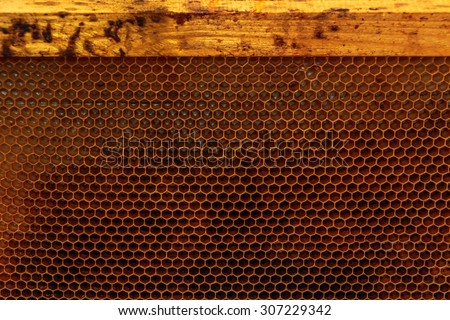 Empty honey bee frame from a hive with Collony Collapse Disorder - stock photo