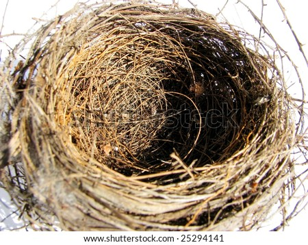 The term empty nest refers to