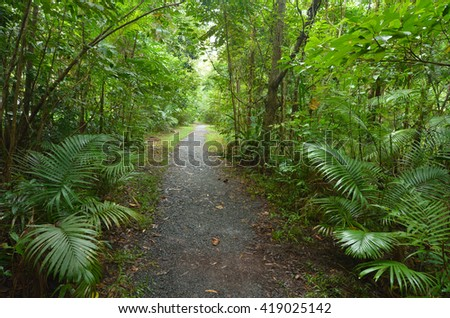 Empty path in Daintree National Park near Cape Tribulation in the tropical north of Queensland, Australia - stock photo