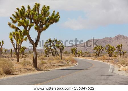 empty road at joshua tree national park, california - stock photo