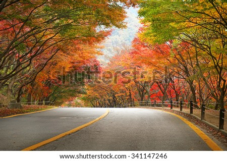 Empty road in forest during autumn. Image is slightly soft due to shooting at slow shutter speed. - stock photo