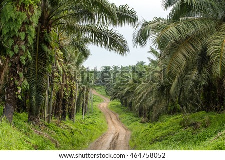 Empty road though palm oil tree plantations in Borneo, Malaysia