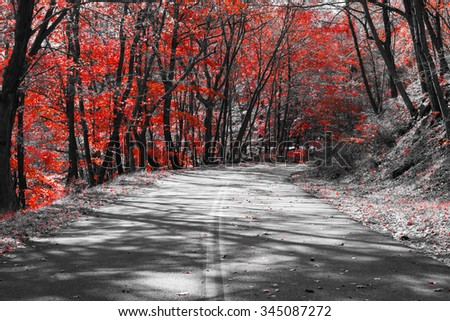 Empty road through a red fall forest in a black and white landscape - stock photo