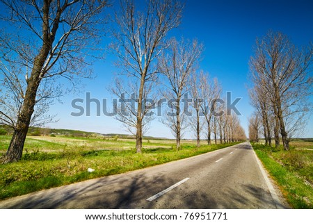 Empty road under blue sky, through lines of trees - stock photo