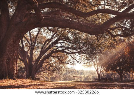 Empty rustic wooden swing hanging by rope on large live oak tree branch in the autumn fall countryside at a farm or ranch looking serene peaceful calm relaxing beautiful southern - stock photo