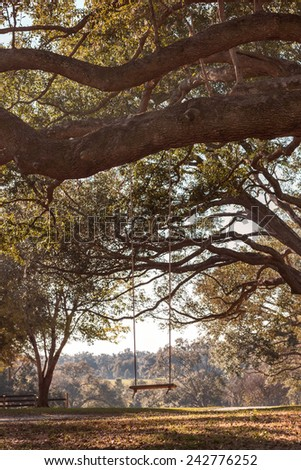 Empty rustic wooden swing hanging by rope on large live oak tree branch in the countryside at a farm or ranch looking serene peaceful calm relaxing beautiful southern - stock photo