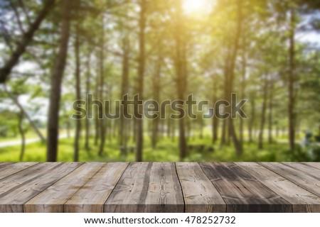 empty space of green forest and sunset