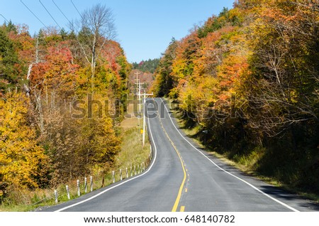 Empty Straight Road Going Upward Lined with Beautiful Autumn Trees on a Sunny Day