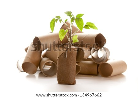 Empty toilet paper roll recycled as a seedling planter - stock photo