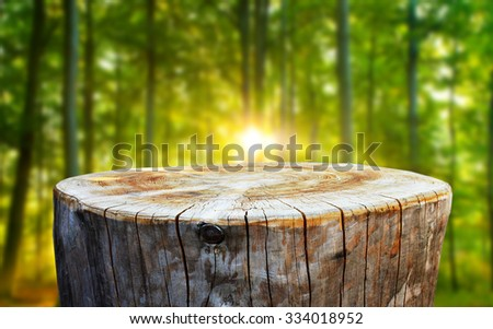 Empty tree trunk for display montages - stock photo