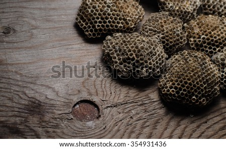 empty wasp nest isolated on the wooden black background